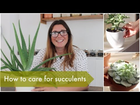 How to care for succulents | Heather At Home