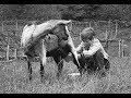 Heintje - Letzte Rose in unser'm Garten ( 1968 )