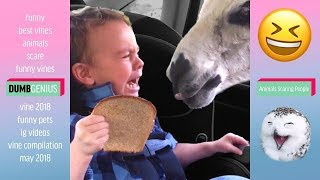 Funny Animals Scaring People! Funniest Animals Video 2019 Part 2