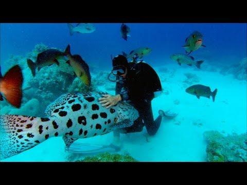 Sharkwater Trailer - HD