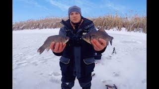 Ловля КРУПНОГО КАРАСЯ зимой в диких местах Карась со льда