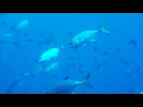 Underwater Fish Atlantis Sub Barbados