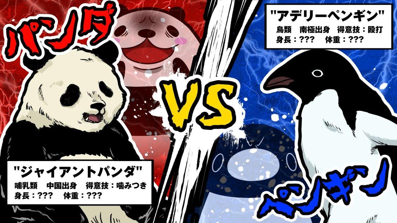 【アニメ】ペンギンVSパンダ…生物として本当に強いのはどちらなのか?【テイコウペンギン】