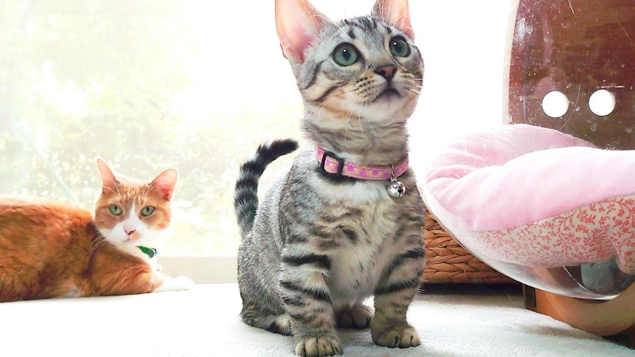何でもオモチャにできる猫 The cats that use anything as a toy.