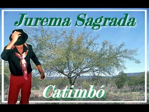 JUREMEIRO , MESTRES DA JUREMA , SALVE A JUREMA SAGRADA - PONTO