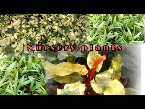 Nursery  Plants  Visits – ll ~ plantation ~ Gardening ~    Horticulture in home .