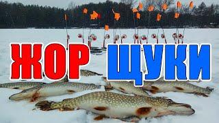ЖОР ЩУКИ на ЖЕРЛИЦЫ в СНЕЖНЫЙ ШТОРМ Щука на жерлицы Зимняя рыбалка 2020