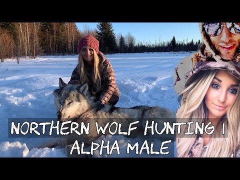 NORTHERN WOLF HUNTING 1
