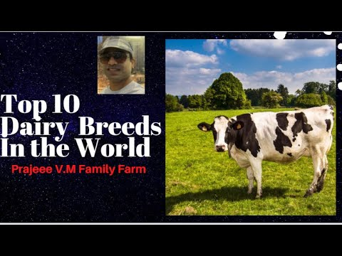 Top 10 Dairy Cattle Breeds İn the World || In terms of Sales Revenue in US Dollar per Cow | Farming