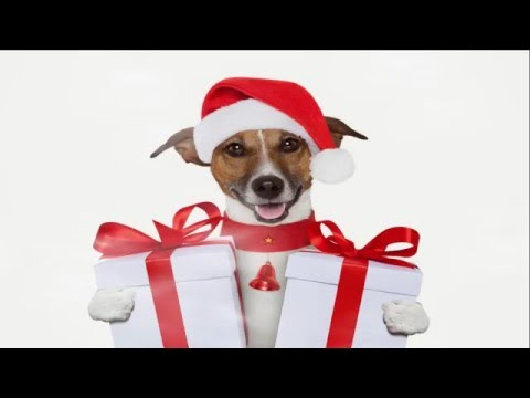 merry christmas dogs and cats version 2015 2016