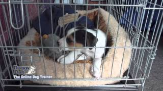 Crate Training Your Puppy
