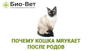 Почему Кошка Мяукает После Родов & Поведение Кошки После Родов. Ветклиника Био Вет