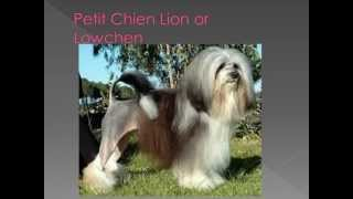 Dog Breed Name Cross-reference Part 11-p
