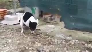 Собака трахает