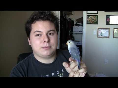 Charlie My New Love Bird
