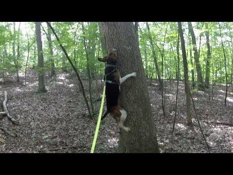 Treeing Walker Buzzpls Com