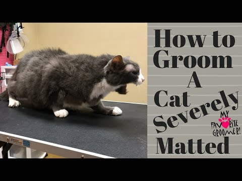 Grooming an extremely matted cat