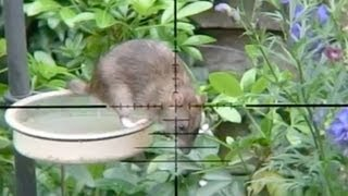 Slow Motion Rat Hunting #17