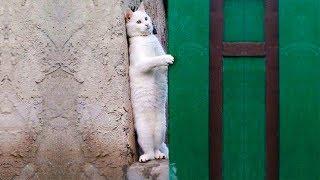 おかしい猫 - かわいい猫 - おもしろ猫動画 HD #175 https://youtu.be/m...