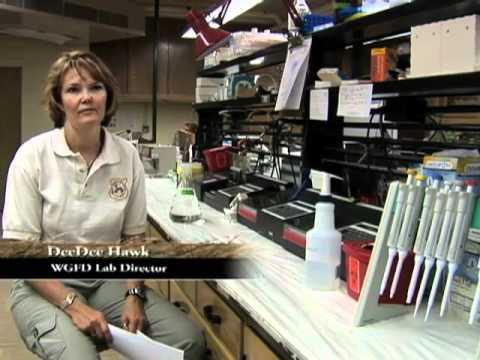 Wyoming Wildlife TV #13--Law Enforcement