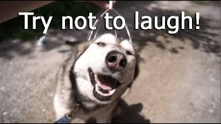 Funny and Cute HUSKY, CAT, Funny Pets