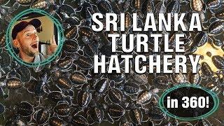 A virtual tour of a Sri Lankan turtle hatchery