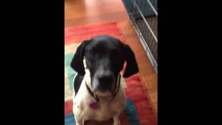 Dogtraining/crate Training: Multiple Dog Household