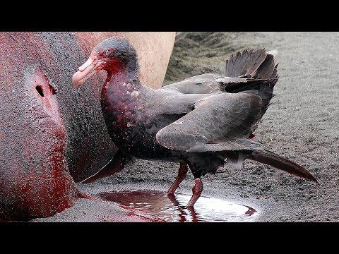 11 Most DANGEROUS Birds