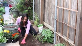 How to Fertilize Carrots : The Chef's Garden