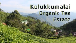 Kolukkumalai - World's Highest Tea Estate in India // Magali Vaz