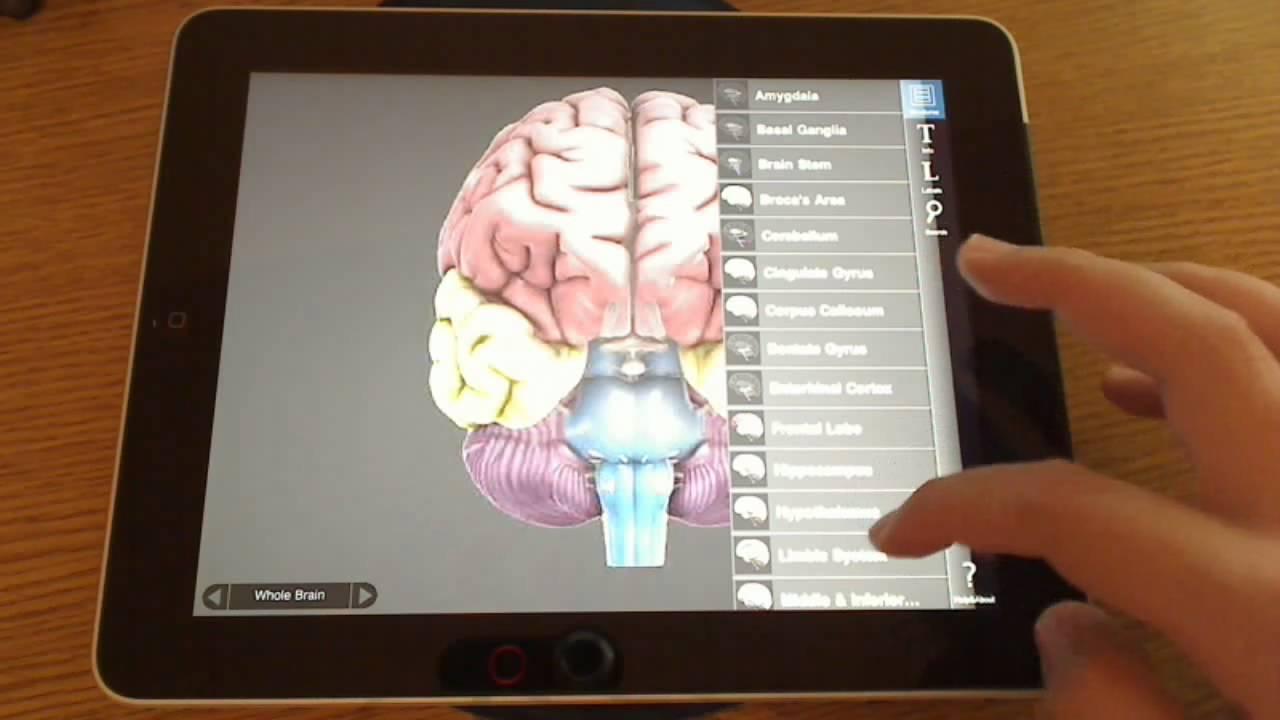 Some Useful Free Neuroanatomy Ipad Apps Reviewed Youtube