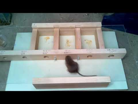 Как маленькая мышь пролезает в узкую щель дома
