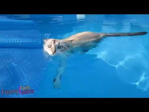 Swimming cats compilation HQ funny