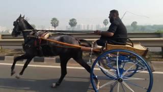 surat horse racing