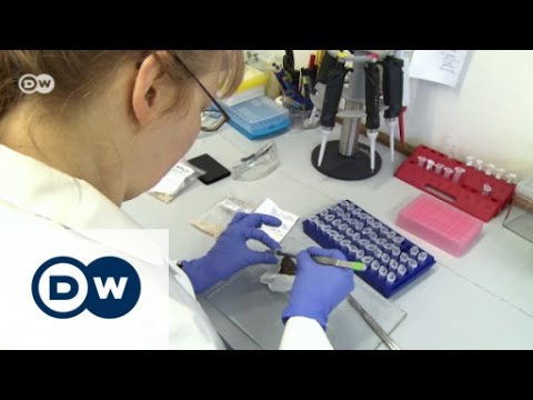 Germany's wood detectives | DW English