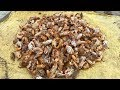 Vietnam street food - Cooking 1000 Sea Crabs for 4 People Family Dinner Meal in Vietnam