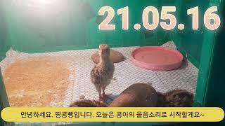 땅콩빵 21.05.16