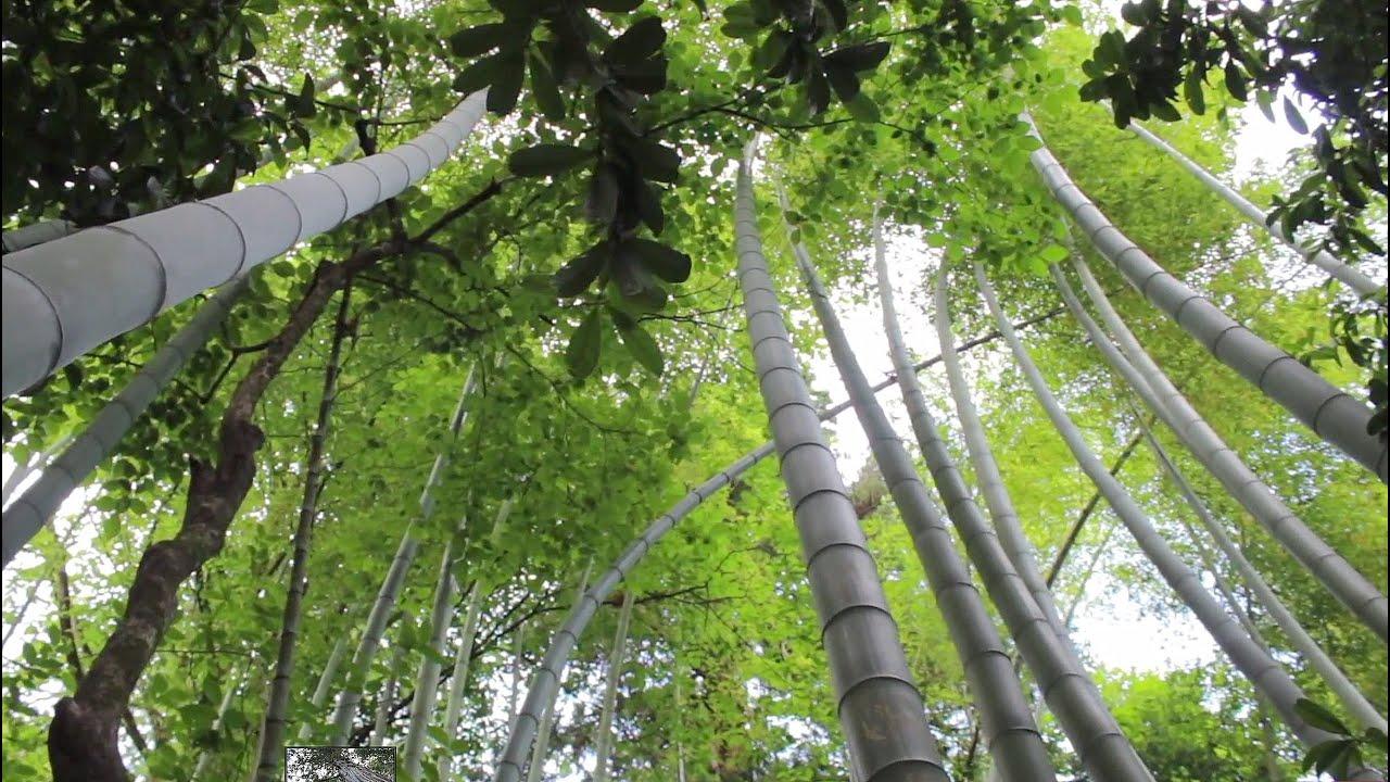 Botanik  Batum Botanik Bahçesi, Gürcistan - YouTube