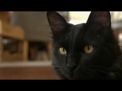 Faune - Allergies Aux Chats : Du Nouveau !