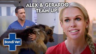 Dog Suddenly Stops Walking!!! Can Alex & Gerardo Find Out Why??? | Bondi Vet