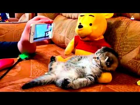 Funny Cats Video 2017 # 22