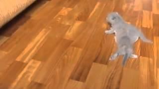 Смешные видео про кошек   Учимся ходить   1