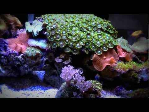 Marine Fluval Edge LED Lighting Mod 6 Gallon Reef Aquarium