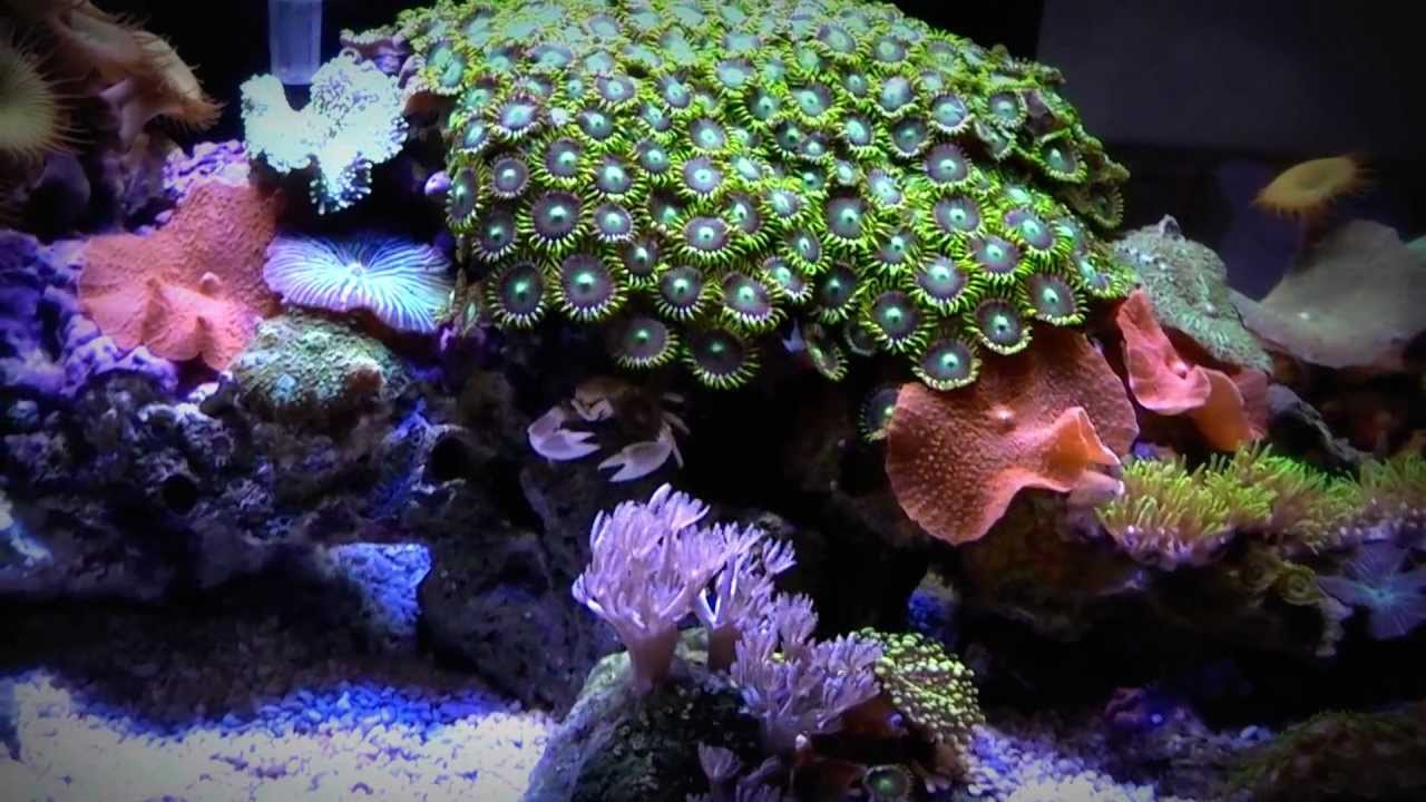 Marine fluval edge led lighting mod 6 gallon reef aquarium youtube marine fluval edge led lighting mod 6 gallon reef aquarium aloadofball Image collections