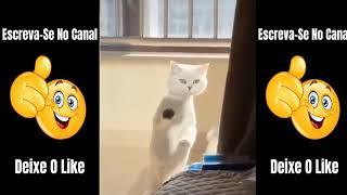 Vídeos de Animais Engraçados - Impossível Não Rir - Vídeos Do Whatsapp