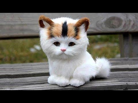 「猫かわいい」 すごくかわいい子猫 - 最も面白い猫の映画 #259