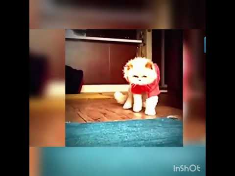 Funny cats and dogs dancing on music