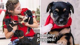 we got puppies!!
