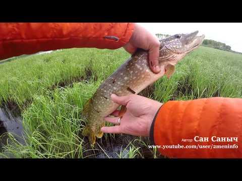 Рыбалка в дождь, щука окунь подъязок. Как щука реагирует на цвет блесны