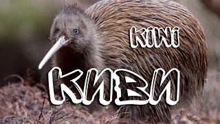 Киви — Kiwi